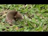 Мышиный бег за хвостом.